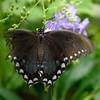 Butterfly_20150824_1529_067