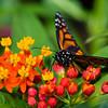 Butterfly2k17_S4_20170812_062