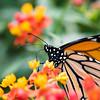 Butterfly_2k16_20160814_101_pp_kk1