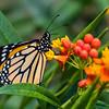 Butterfly2k17_S4_20170812_068