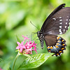 Butterfly_2k16_20160814_051_pp_crop2