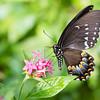Butterfly_2k16_20160814_051_pp_crop2