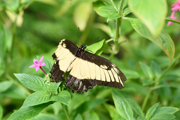 Butterfly_20150824_1535_087