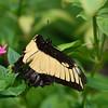Butterfly_20150824_1535_089