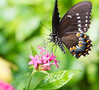 Butterflies 2015-2017