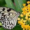 Butterfly_20150907_1554_245