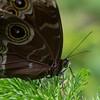 Butterfly2k17_2_20170603_097