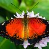 Butterfly2k17_20170520_092