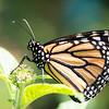 Butterfly_2k16_20160814_032_pp_kk1