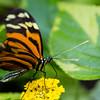 Butterfly2k17_2_20170603_098