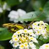 Butterfly2k17_20170520_052