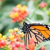 Butterfly_2k16_20160814_100_pp_kk1
