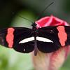 Butterfly_20150824_1521_046