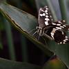Butterfly_20150824_1519_038