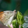 Butterfly2k17_20170520_102