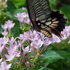 Butterfly2k17_20170520_151