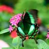 Butterfly_20150824_1548_132_2v