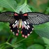 Butterfly_20150824_1537_097