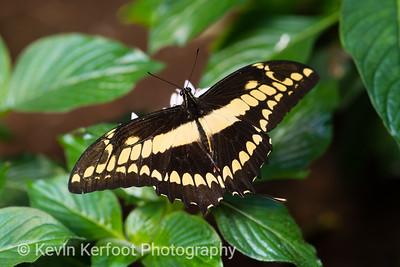 Butterfly2k18_20180331_033