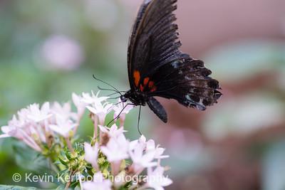 Butterfly2k18_20180331_059