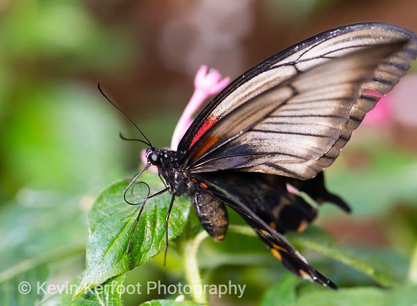 Butterfly2k18_20180331_158