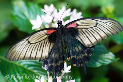 Butterfly2k18_20180331_008
