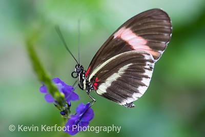 Butterfly2k18_20180331_066
