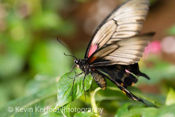Butterfly2k18_20180331_156
