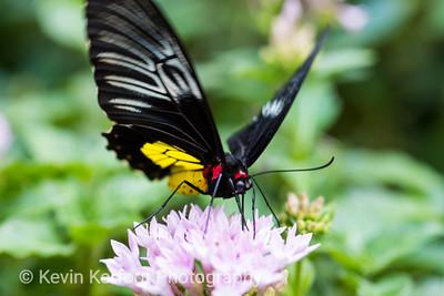 Butterfly_s2_2k18_20180630_154