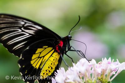 Butterfly_s2_2k18_20180630_179