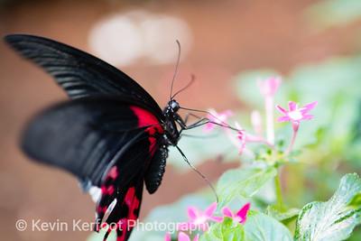 Butterfly2k18_20180331_071