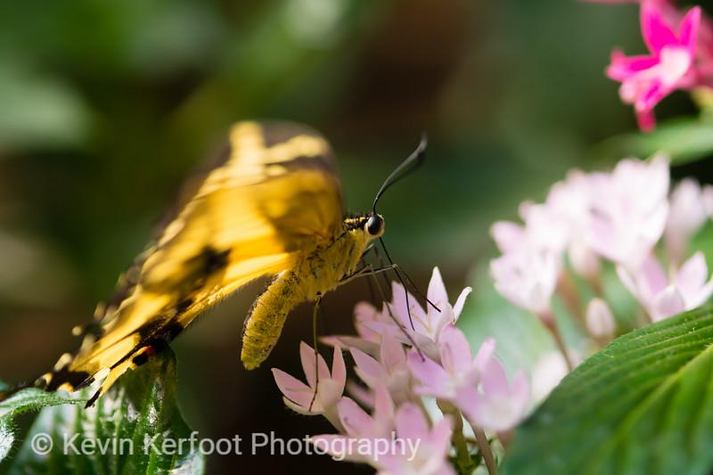 Butterfly2k18_20180331_096