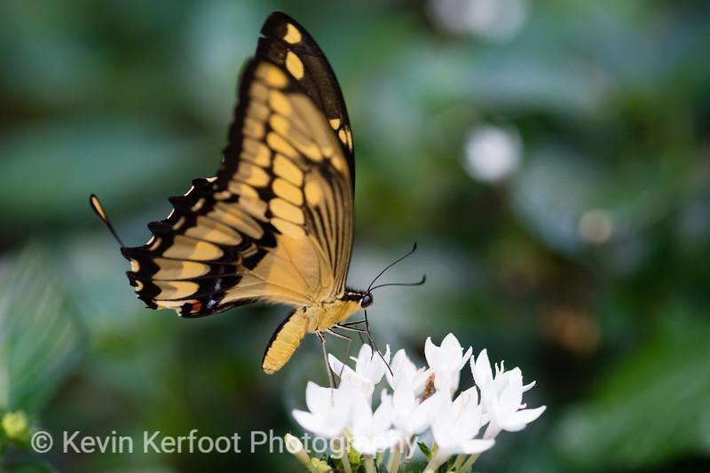Butterfly2k18_20180331_101