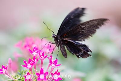 Butterfly2k18_20180331_051