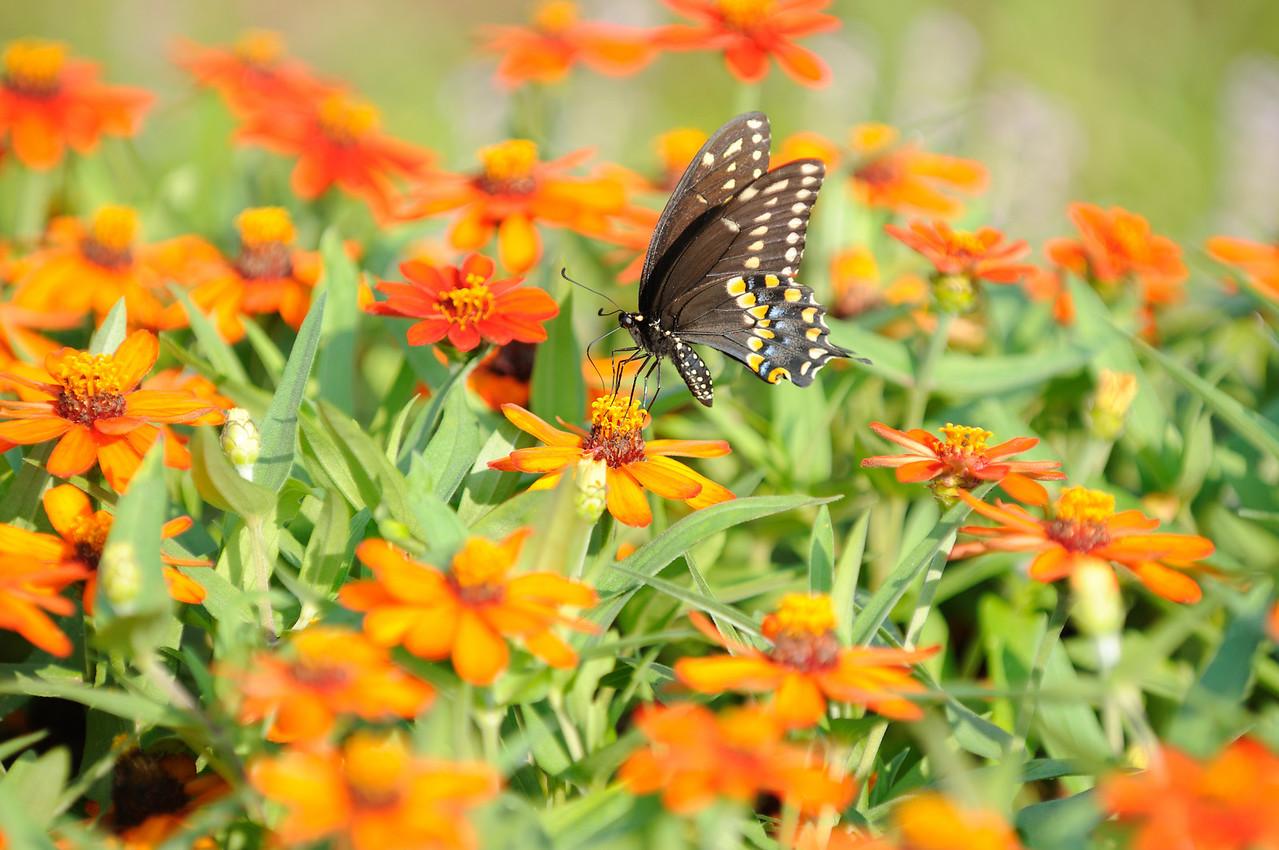 Butterflies82409_023