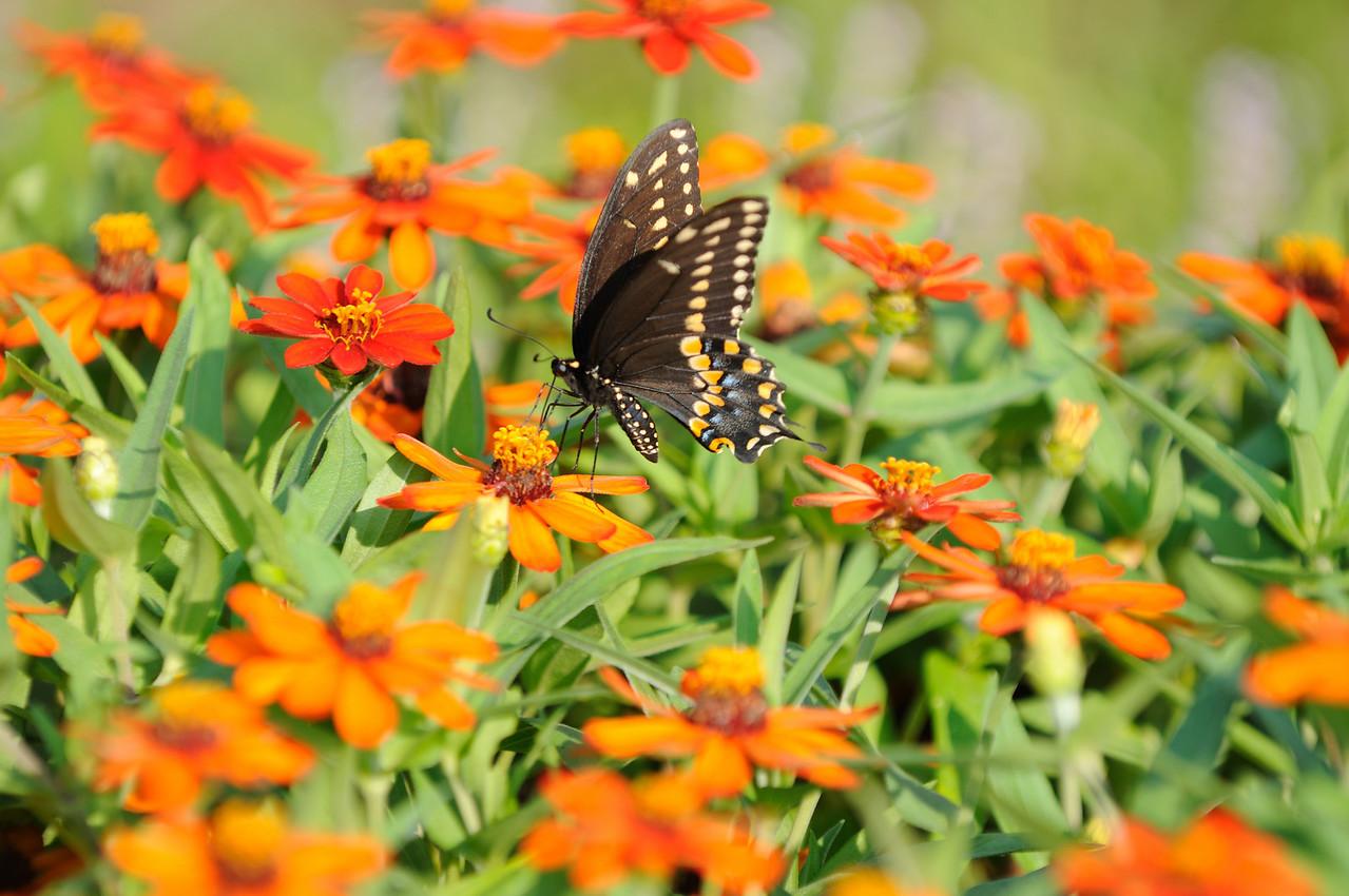 Butterflies82409_020
