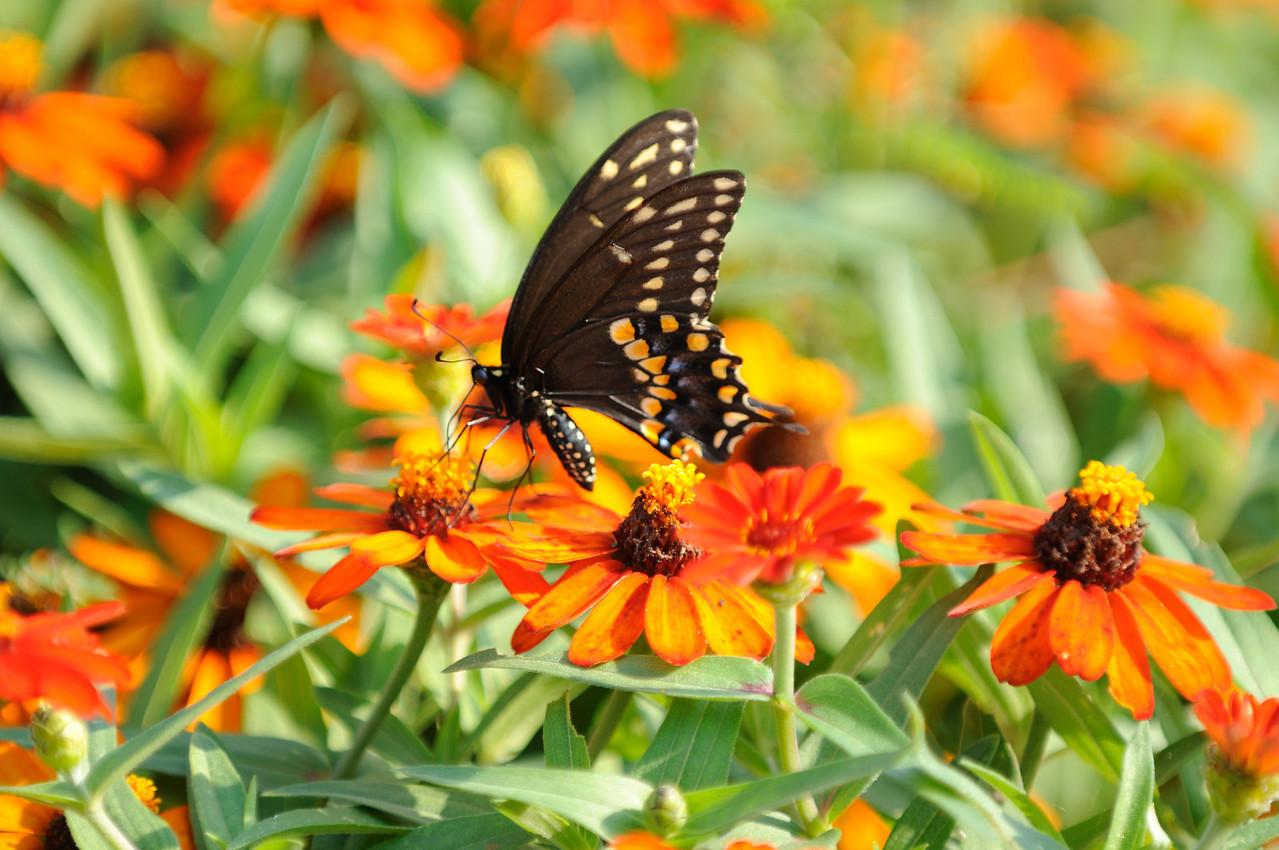 Butterflies82409_029
