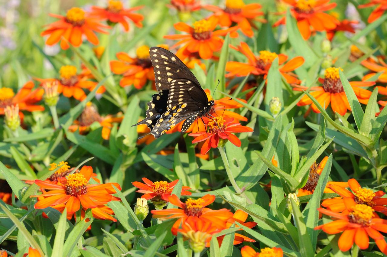 Butterflies82409_006
