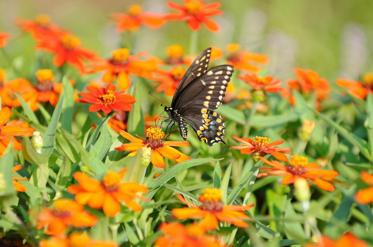 Butterflies82409_021