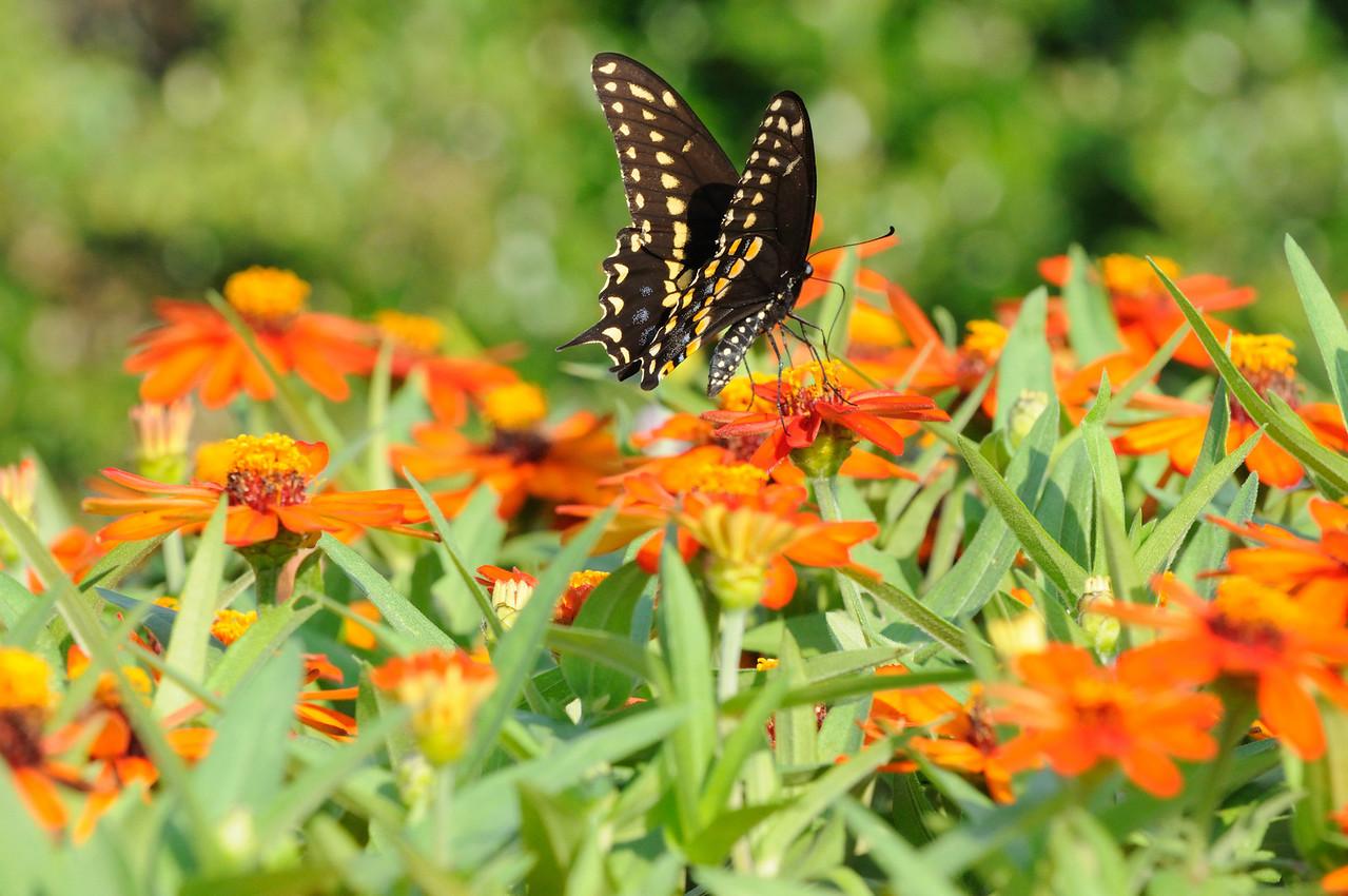 Butterflies82409_007