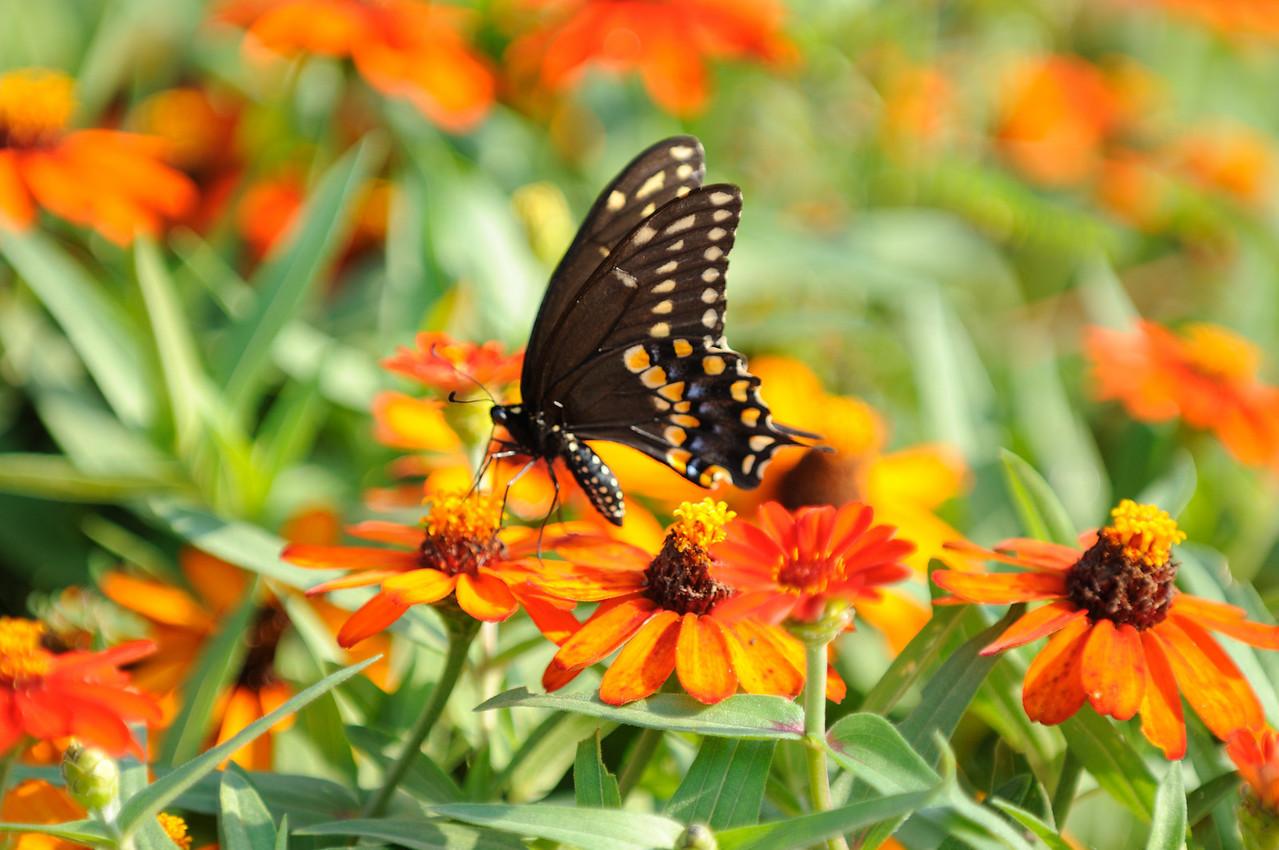 Butterflies82409_028
