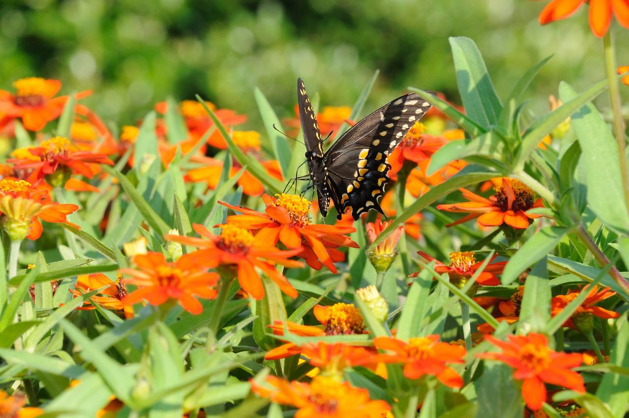 Butterflies82409_015