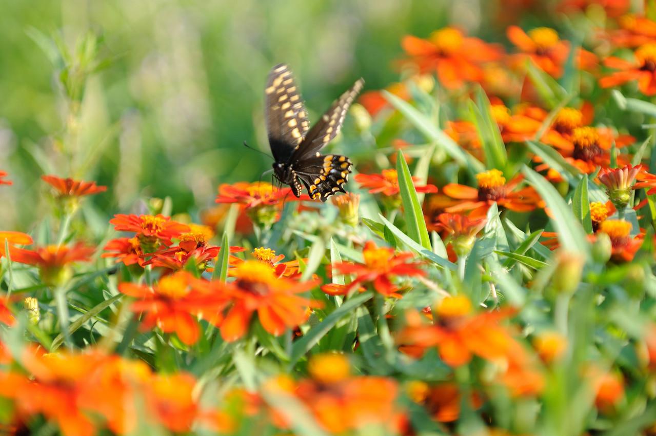 Butterflies82409_040