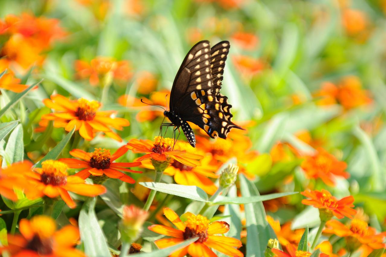 Butterflies82409_031