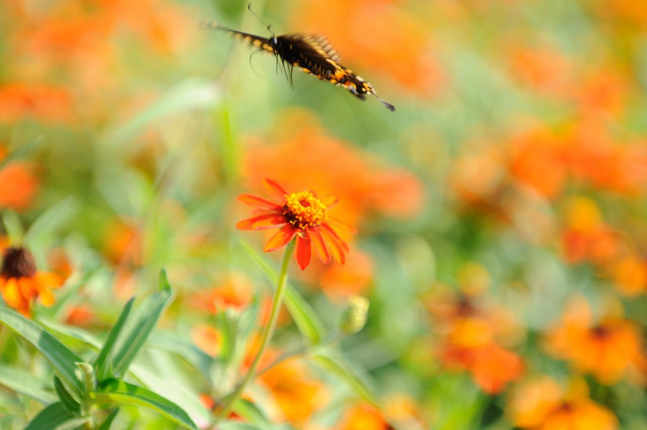 Butterflies82409_036