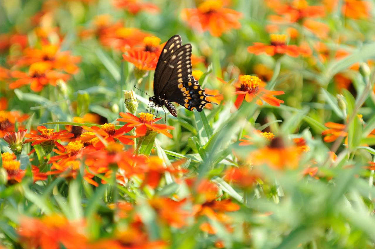 Butterflies82409_038
