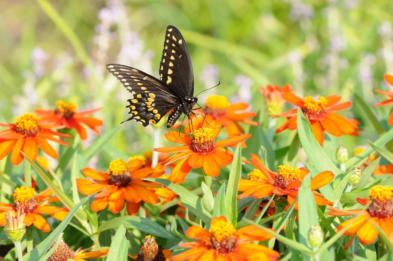 Butterflies82409_004