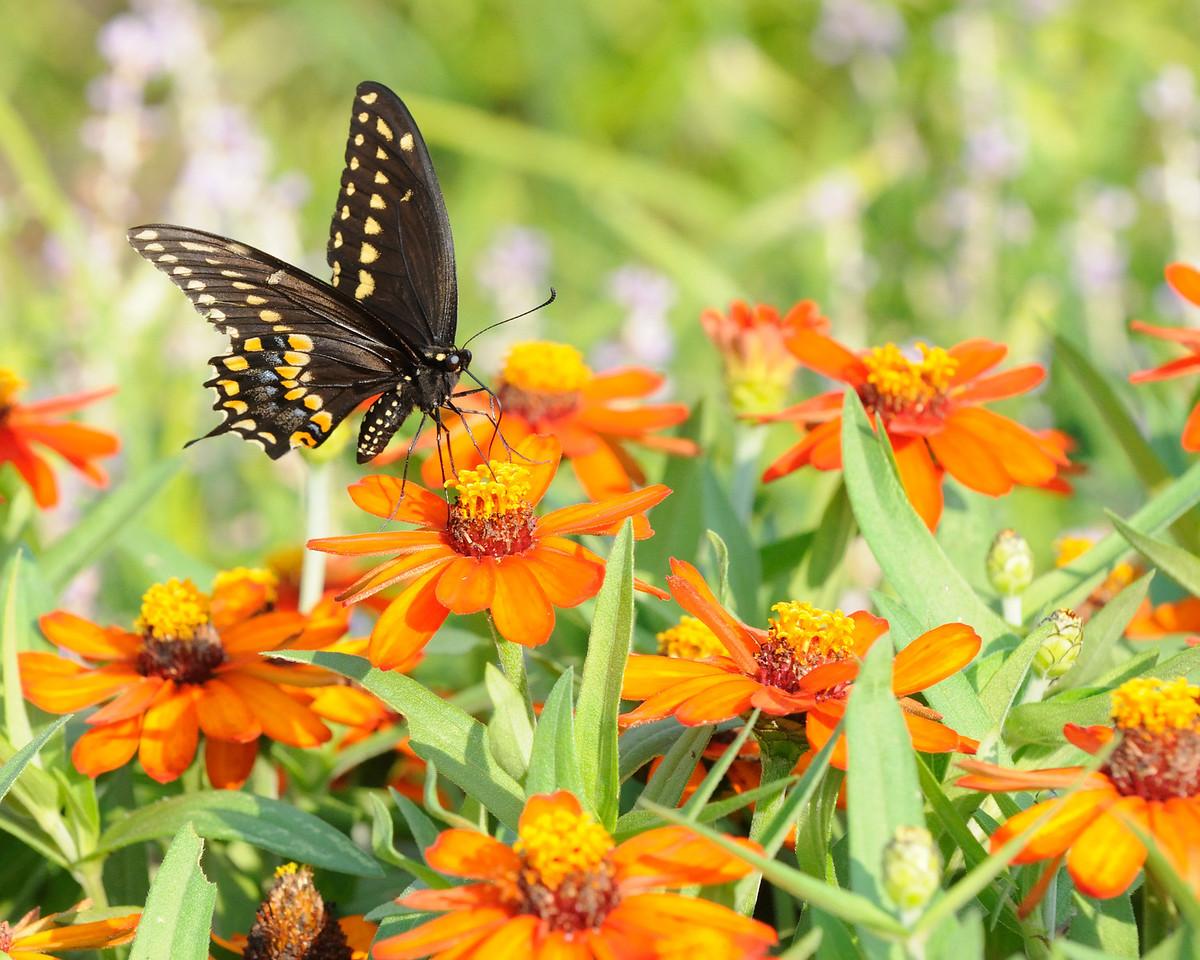 Butterflies82409_005