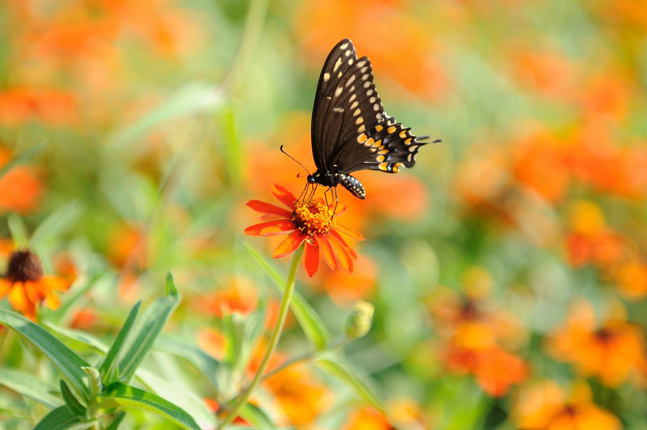 Butterflies82409_035