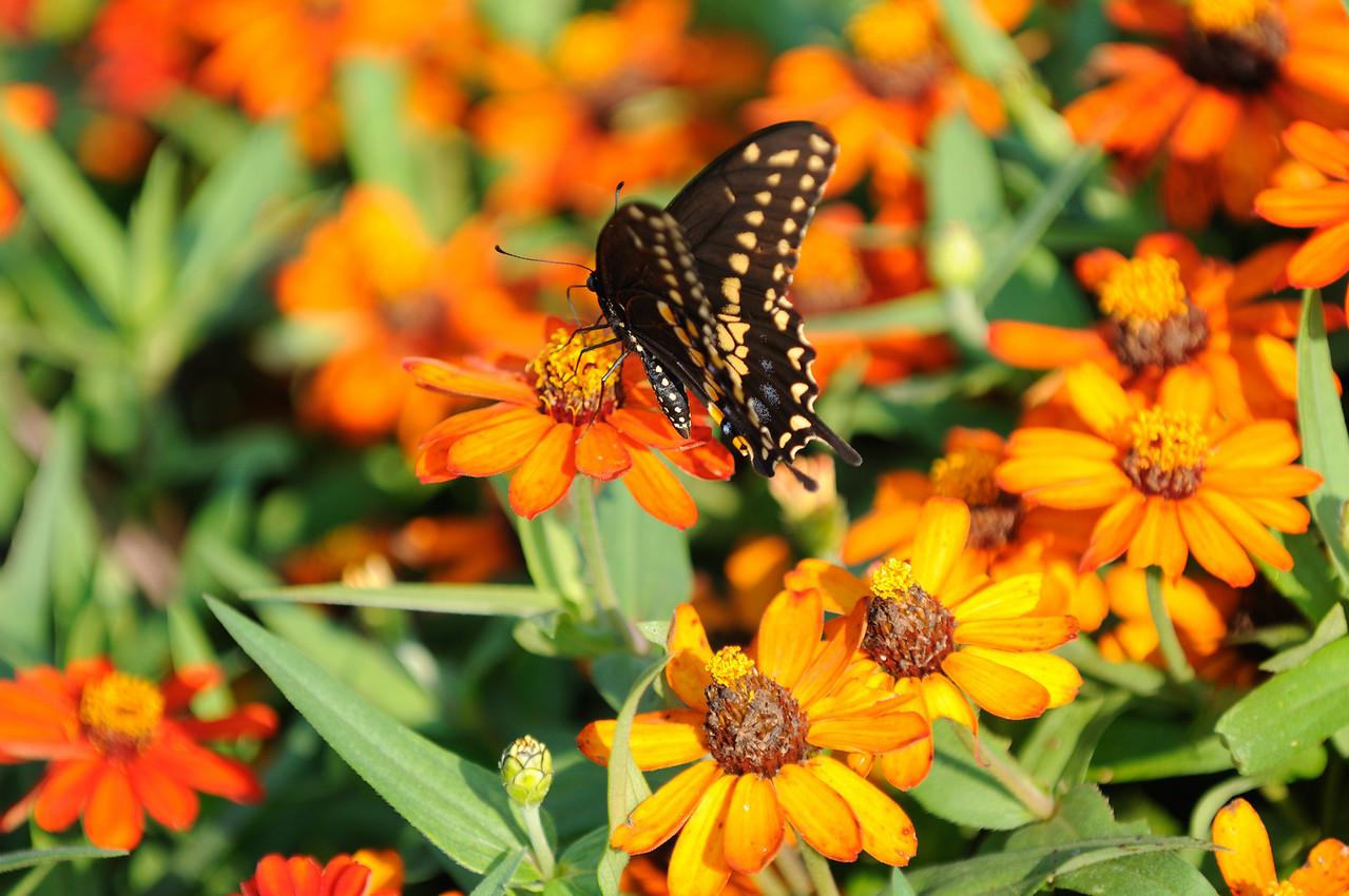 Butterflies82409_025
